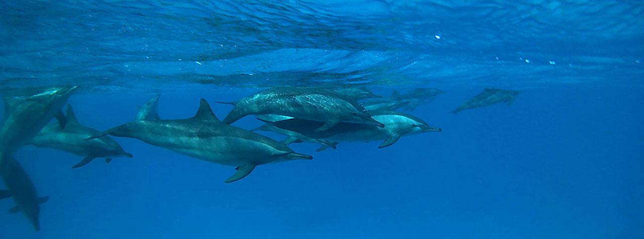 Ägypten Delphine